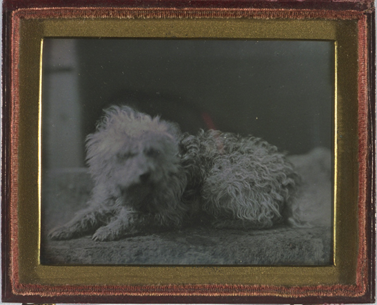 Portrait of a dog, April 1846, Kodak Collection, National Media Museum