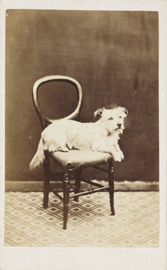 A dog on a chair, c.1865, National Media Museum Collection