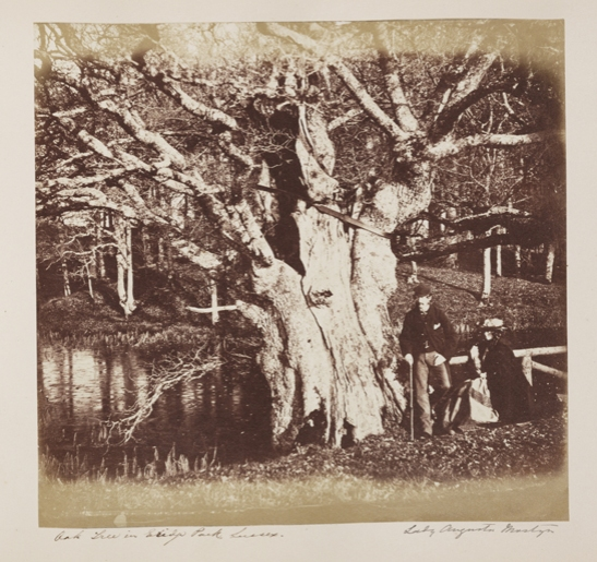 'Oak Tree in Erdige Park, Sussex', c.1856, Lady Henrietta Augusta Mostyn (née Nevill), The Royal Photographic Society Collection, © National Media Museum, Bradford / SSPL. Creative Commons BY-NC-SA