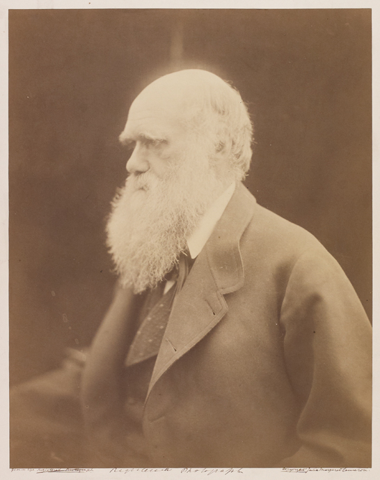 'Charles Darwin, Naturalist', 1868, Julia Margaret Cameron, The Royal Photographic Society Collection © National Media Museum, Bradford / SSPL. Creative Commons BY-NC-SA