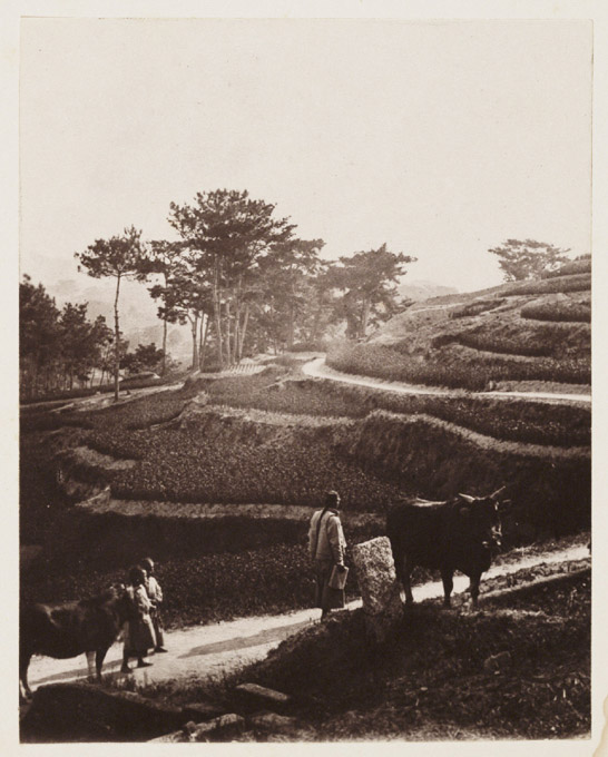 Road to the Plantation, c. 1871, John Thomson © National Media Museum, Bradford / SSPL. Creative Commons BY-NC-SA