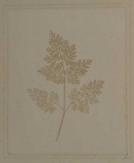 Plate VII from The Pencil of Nature, Leaf of a Plant, William Henry Fox Talbot © National Media Museum, Bradford / SSPL. Creative Commons BY-NC-SA